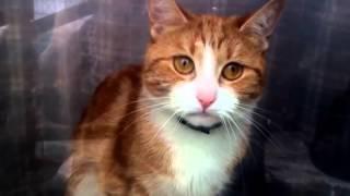 Смотреть онлайн Кот вот-вот заплачет прощаясь с хозяином
