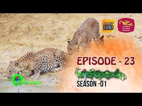 Sobadhara  | Season - 01 | Episode 23 | Sobadhara Rupavahini