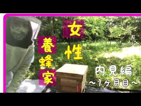 , title : '【初心者養蜂家】①1カ月目(2020.5.11)