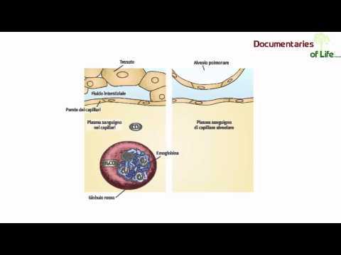 Se è possibile mettere impianti nei pazienti con diabete mellito di tipo 1