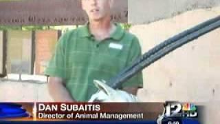 Phoenix Zoo Arabian Oryx story featured on Channel 12