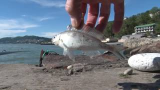 Рыбалка на Чёрном море в Сочи