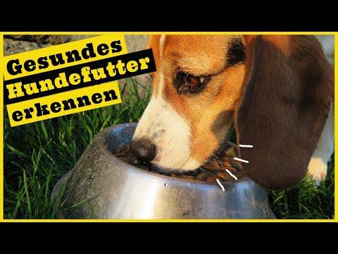 Hundefutter / Trockenfutter für Hunde / Das steckt im Futter drin / Zusammensetzung verstehen
