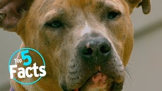 10 Facts about Dogs