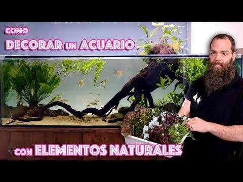 Consejos para decorar el acuario con elementos naturales