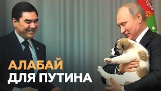 Президент Туркмении подарил Путину щенка алабая