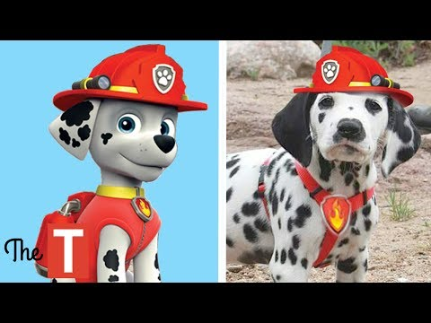10 PAW PATROL Dogs In Real Life