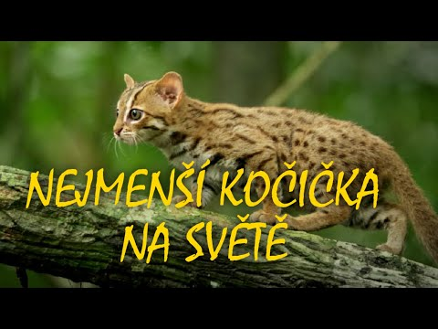 malá kočička hd