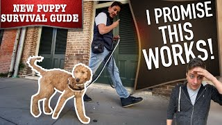 How To Practice Your Canine to Stroll on Leash WITHOUT Embarrassing You!