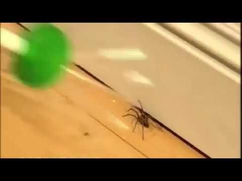 Spinnen fangen leicht gemacht - Spinnenfänger