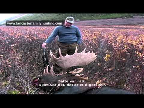 Hunting moose with Bart Lancaster in B.C. Canada, good killscene.
