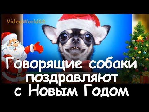 Поздравление с Новым Годом от собак.