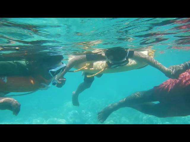 Snorkeling at elephant beach with my kid