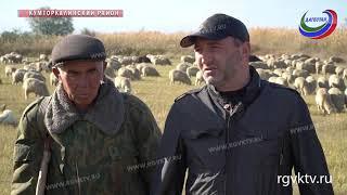 В Дагестане завершается перегон скота на зимние пастбища