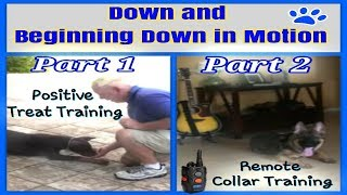 How to teach your dog Down in Motion: Part 1 and Part 2 (two videos in one) ONLY $19.99