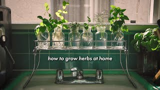 How To Grow Herbs At Home Without Soil 🌿