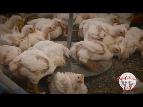 Das Tierwohl - Geflügelwaage Masthuhn