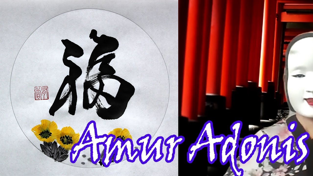 Amuradonis