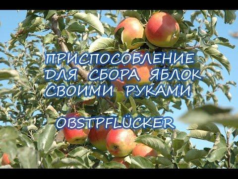 Приспособление для снятия яблок с дерева своими руками.Obstpflücker