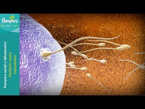 PCR diagnostika pro prostatu