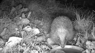 Wildlife Trail Camera - 5.11.2018