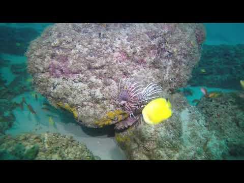 Scuba Diving Snake reef Flic En Flac,Mauritius
