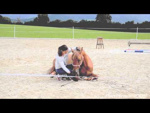 Erlebnisse aus einem Urlaub bei uns am Steinerhof mit dem eigenen Pferd