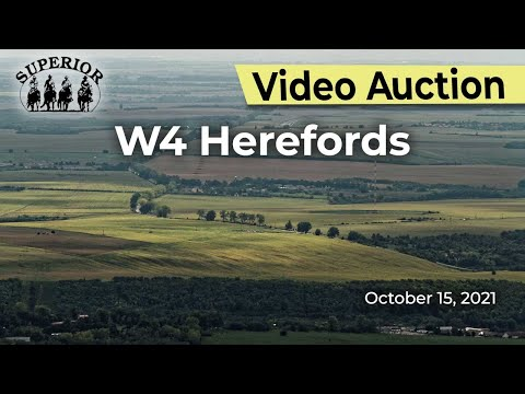 W4 Herefords