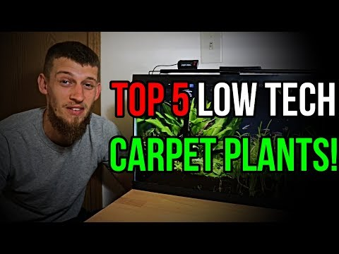 MY TOP 5 FAVORITE LOW TECH CARPETING PLANTS