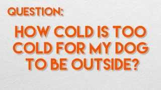 How Cold is Too Cold for my Dog to be Outside? - Ask Dr. Andy