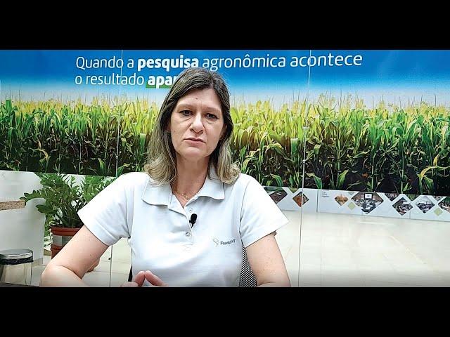 Como minimizar os efeitos da Cigarrinha do milho nas lavouras