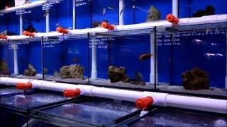 Aquahome Aquatics Centre | Marine Fish