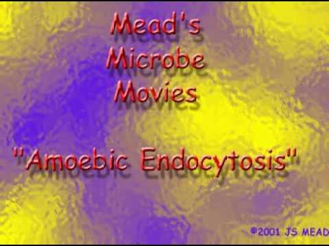 Kabilang ang mga organismo ay parasites tinder
