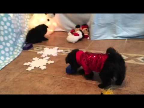 Jag playing with decorations
