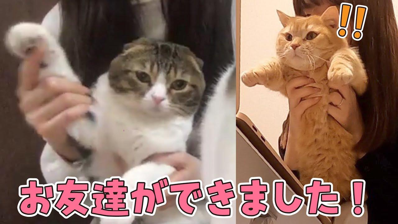 【夢のコラボ!】初めての猫友達とzoomで対面しました!〜スコスコぽこ太郎&うま次郎〜