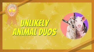 Your Best Moments of Unlikely Animal Duos