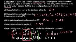 How To Calculate Genotype And Phenotype Frequencies In The F1 Generation