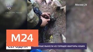 Пожарные спасли кошек из горящей квартиры - Москва 24