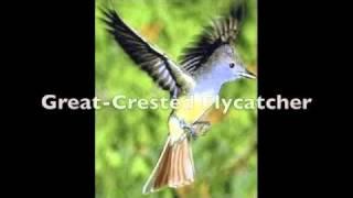 Bird Call Video