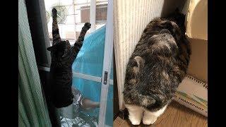 猫ちゃんが地震の影響で驚くほど奇怪な行動をし始めた件w~Thecatbegantoactbizarrebytheinfluenceoftheearthquake.
