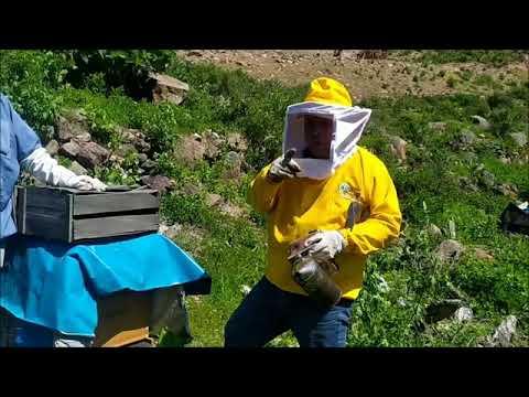 , title : 'APICULTURA PARA PRINCIPIANTES: Algunos manejos simples y utiles para el apicultor