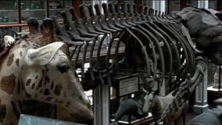 Inside the Dead Zoo Part 1