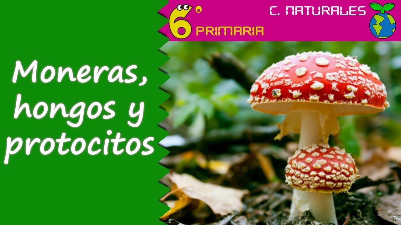 Moneras, proctistas y hongos. Naturales, 6º Primaria