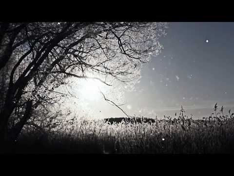 Zavod – Tsar: Music