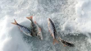 Рыбалка теплое брянская область