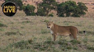 safariLIVE - Sunset Safari - November 12, 2018