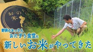 野洲のおっさんおにぎり食堂レポート「田上米がやってきた!」