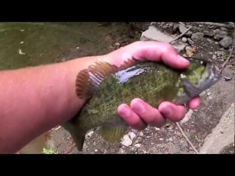 Creek SmallMouth Bass Fishing