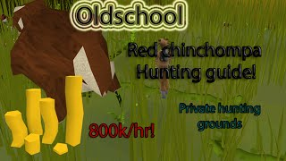 Oldschool Runescape - Red Chinchompa hunting Guide! 800k+gp/hr 125k+xp/hr (PRIVATE HUNTING AREA)