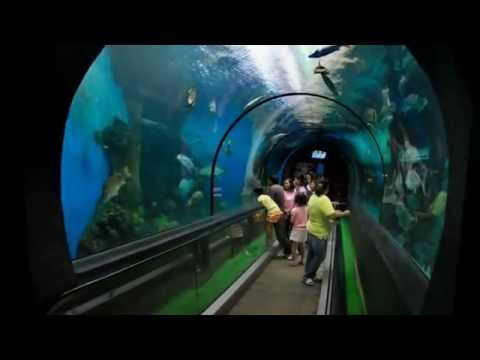 Video Top 10 Tourist Attractions in Thailand   Visit and Travel Guide To Phuket Part 2